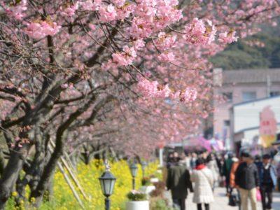 桜スポット周辺や公園に防犯監視カメラ設置で安全に楽しもう